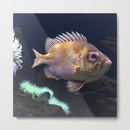 grumpy fish Metal Print