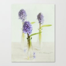 blue Hyacinthus Canvas Print