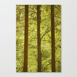Three Tree Trunks #decor #society6 Canvas Print