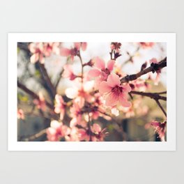 Spring has come 2 Art Print