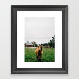 Horse // Oregon Framed Art Print