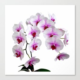 White and red Doritaenopsis orchid flowers Canvas Print
