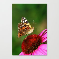 Butterfly macro 64 Canvas Print