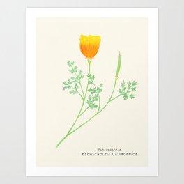 Botanical Sketches 6: California Poppy Art Print