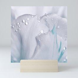 White tulip with water drops 27 Mini Art Print