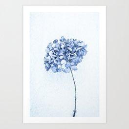 Hydrangea Blue 2 Art Print