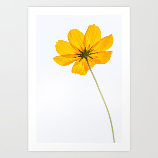 yellow cosmos flower Art Print