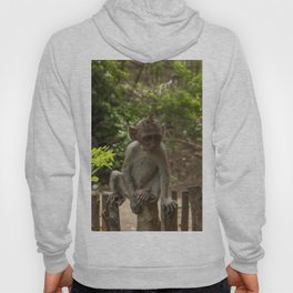 Wise baby monkey Hoody