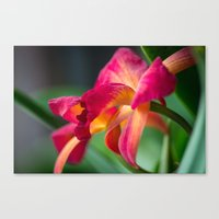 tequila Canvas Prints featuring Tequila Sunset by Robin Anguiano