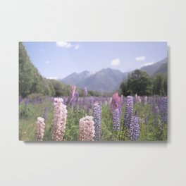 Fields of Flowers - Southland, New Zealand Metal Print