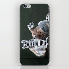 Ring Tailed Lemurs iPhone & iPod Skin