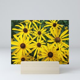 Golden Rudbeckia flowers in the garden Mini Art Print