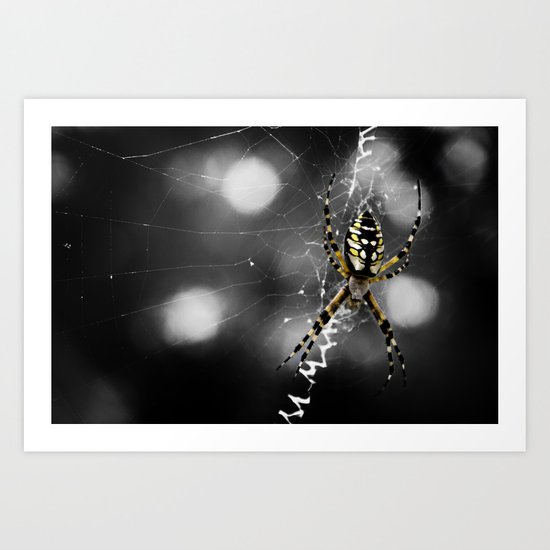 Banana Spider Macro Color Pop Art Print