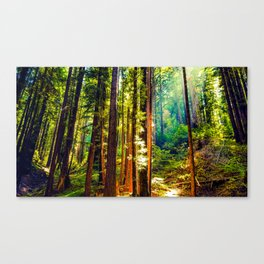 Henry Cowell Redwood State Park Canvas Print