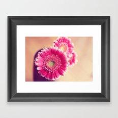 Pink Gerber Daisies  Framed Art Print
