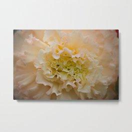 Begonia Ruffle Metal Print