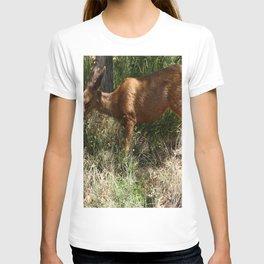 Mule Deer At Zion Park T-shirt
