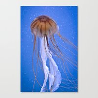 jelly fish Canvas Prints featuring Jelly fish by Cozmic Photos