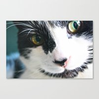 meow Canvas Prints featuring Meow by Kakel-photography