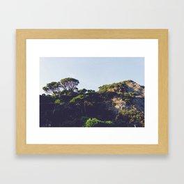 Monterosso trees Framed Art Print