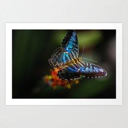 Bright Butterfly Art Print