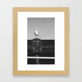 Seagull Takes A Break Framed Art Print