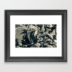 Dungeness Crab  Framed Art Print