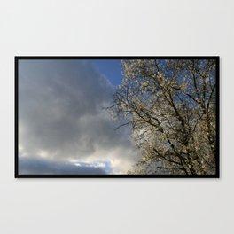 Cherry Bloom Sky Canvas Print
