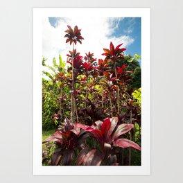 Red Ti Tropical Gardens Hawaiian ti plant Wailua Maui Hawaii Art Print