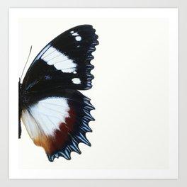 Madagascan Diadem Butterfly Art Print