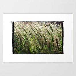 Soft Breeze Art Print