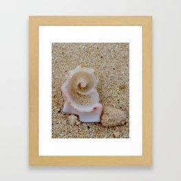Spiral Shell ~ Bahamas Framed Art Print