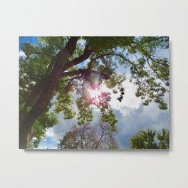 Warmth of the Sun Metal Print