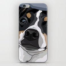 Hailey Dog iPhone & iPod Skin