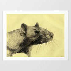 Rat 3 Art Print