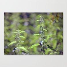 Stinging Nettle 5288 Canvas Print