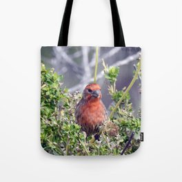 Handsome Male House Finch Tote Bag