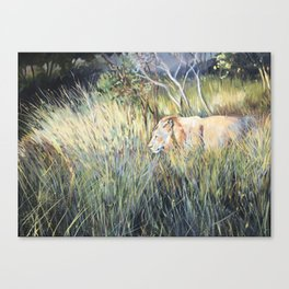 Lion - Big 7 Canvas Print
