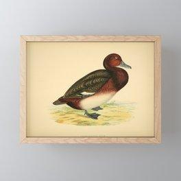 Ferruginous Duck3 Framed Mini Art Print