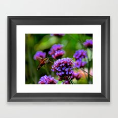 The Hummingbird Moth Framed Art Print