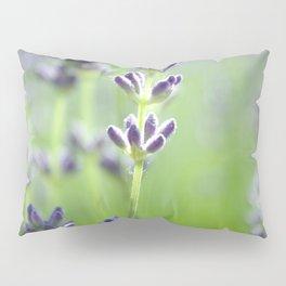 Lavander Pillow Sham