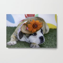 English Bulldog Puppy Wearing a Straw Hat with Bright Orange Flower for Spring Metal Print