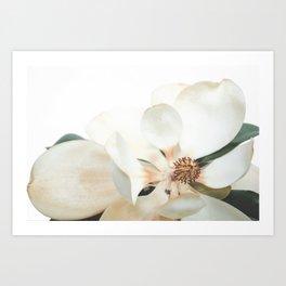 Botanical Magnolia in Color 1 Art Print