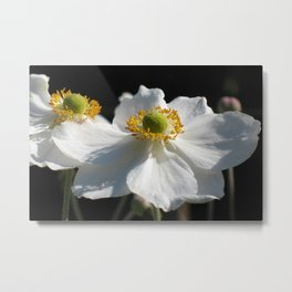 White on Black - Anemone Flowers Metal Print