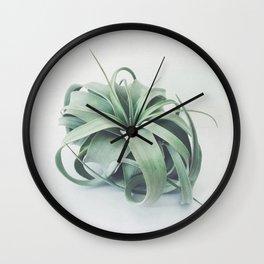 Air Plant III Wall Clock