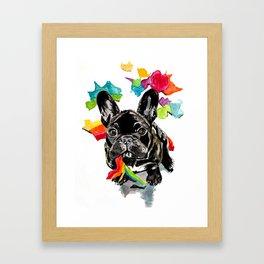 When a dog catches a rainbow Framed Art Print