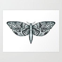 Patterned Moth  Art Print