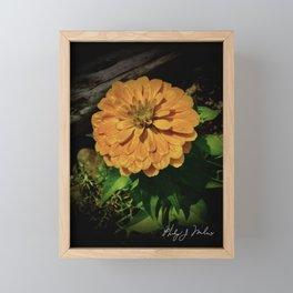 Yellow Zinnia Framed Mini Art Print