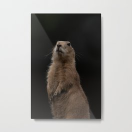 Prairie Dog Lookout Metal Print