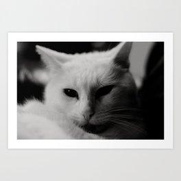 Generic Cat Picture Art Print